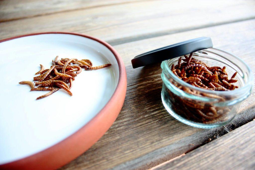 Crazy: Sprøde insektsnacks fra danske Enorm